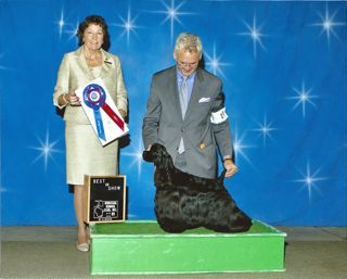 2011-best_in_show_kenosha_kennel_club
